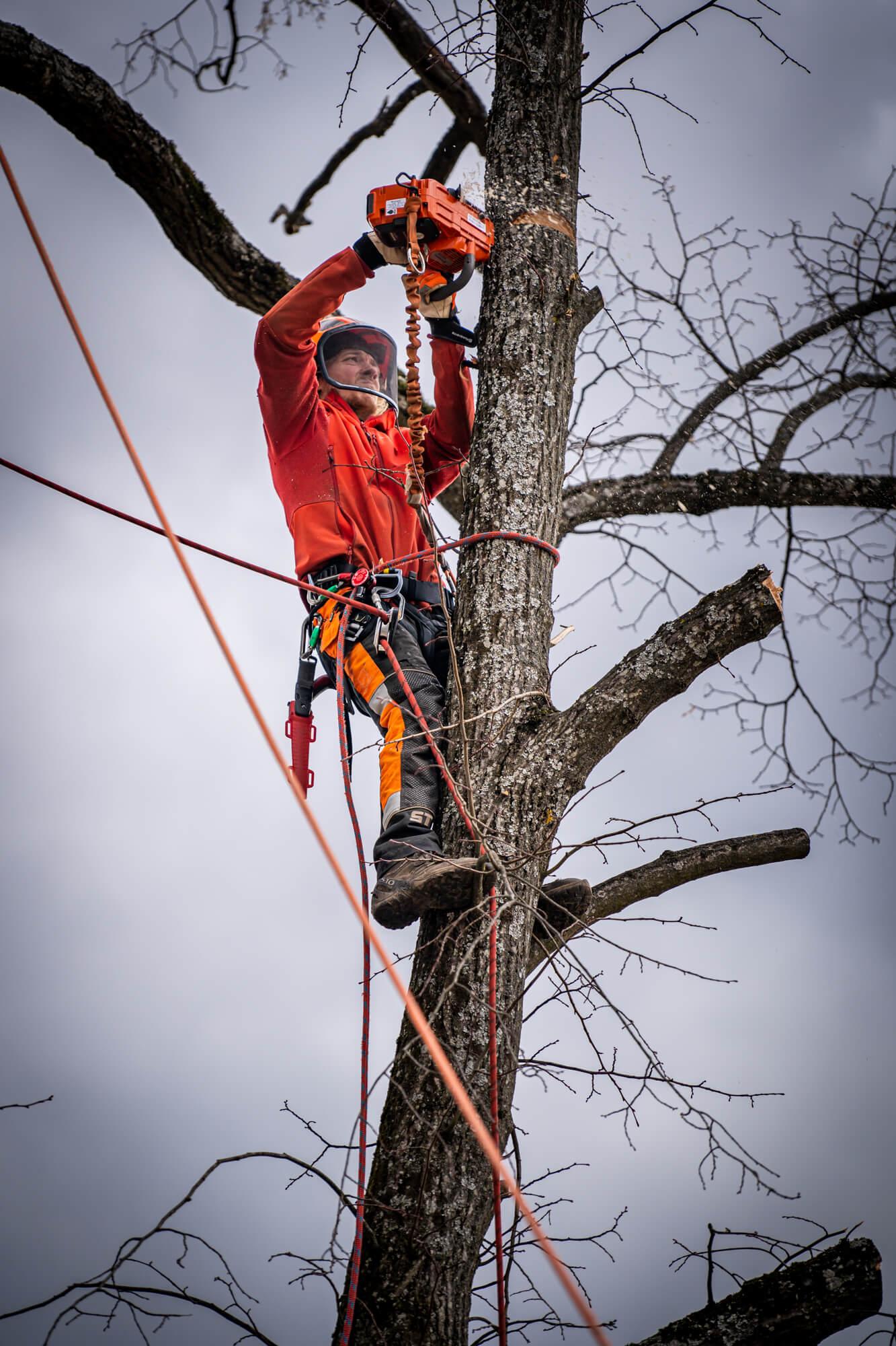 Arborist Podžaguje Drevo na Višini