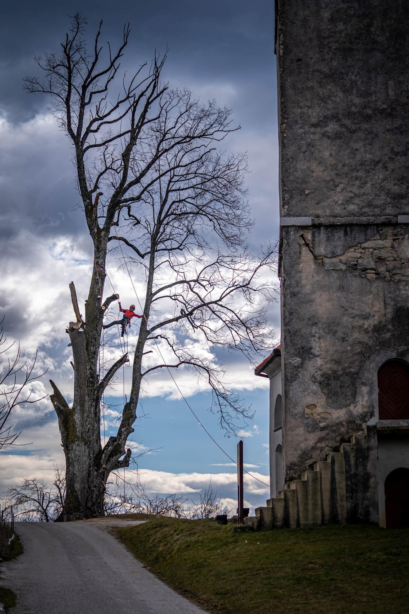 Arborist, ki Obrezuje Drevo na Višini v Urbanem Okolju