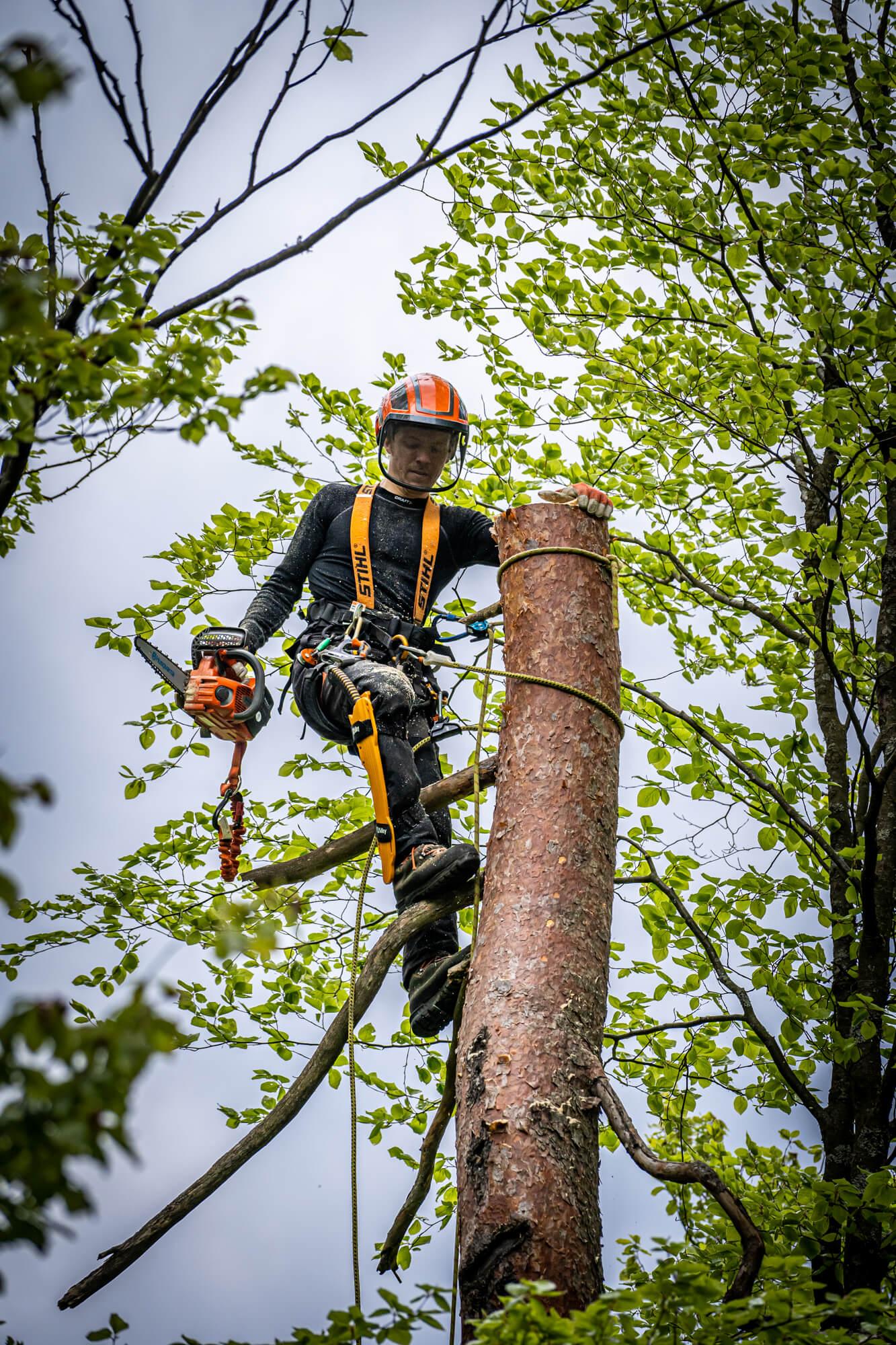 Sekač Podira Drevo na Višini