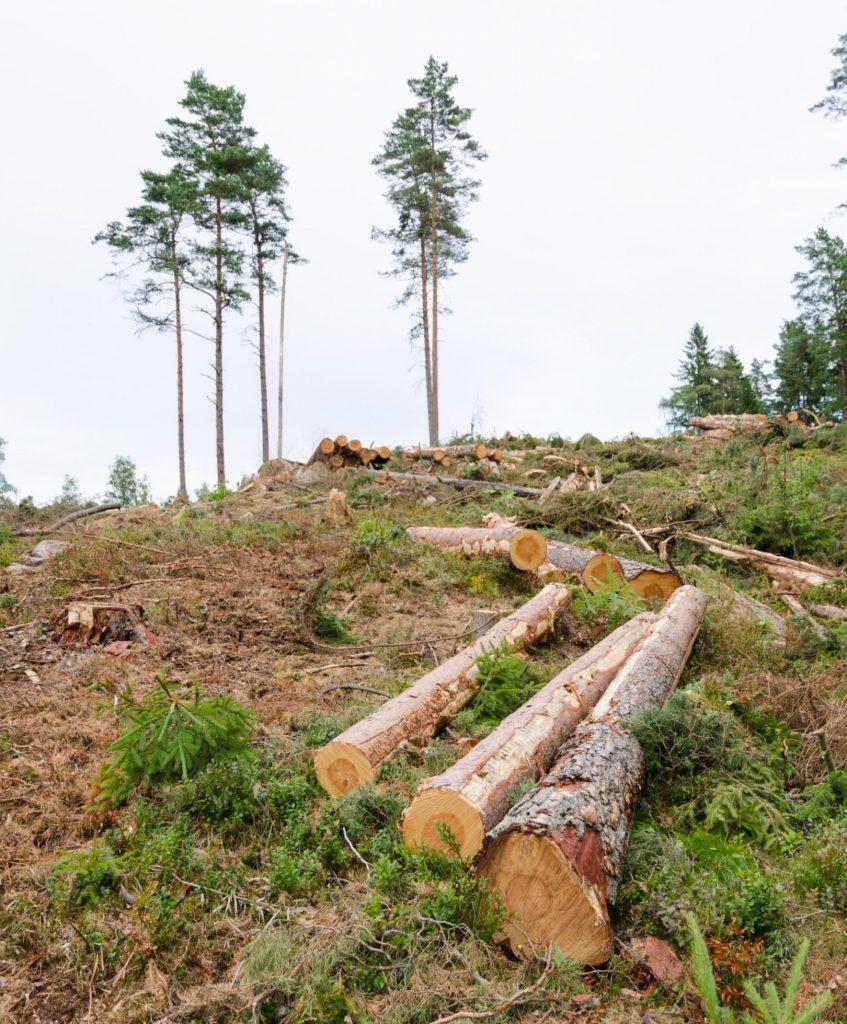 Podiranje dreves z dvigalom